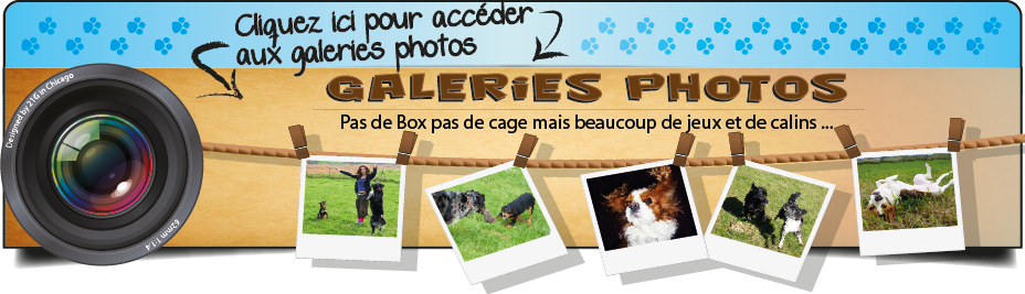 galerie photo dog sitting toulouse